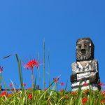 「花守山」の枝垂れ桜(高鍋町)~福島県の「花見山」をモチーフに~