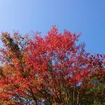 「尾鈴山瀑布群」矢研の滝 ~都農町~