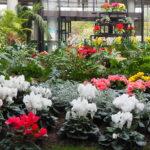 フローランテ宮崎 ~心躍る花の庭園~